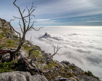 Low fog over Lions Head from Table Mountain with branch