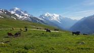 La vallée de Chamonix surplombé par la chaîne du Mont-Blanc
