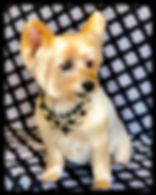 Best Pet Groomer, Dog Groomer, Sedona, VOC, Pet Spa