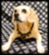 Best Dog Groomer, Best Pet Groomer, Sedon, VOC, Pet Spa