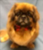 Pet Groomer, Dog Groomer, Sedona, VOC, Pet Spa