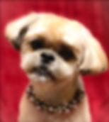 Best Groomer, Sedona, VOC, Pet Spa