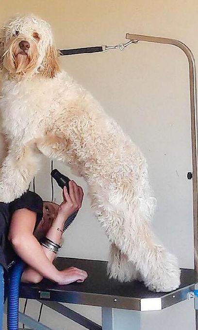 Dog Grooing, Pet Grooming, Sedona