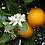 Thumbnail: 100% Pure Sweet Orange Essential Oil - Citrus Sinensis 15mL