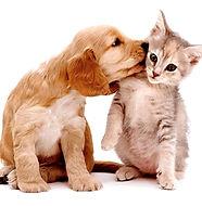 calculo-renal-dog-cat.jpg