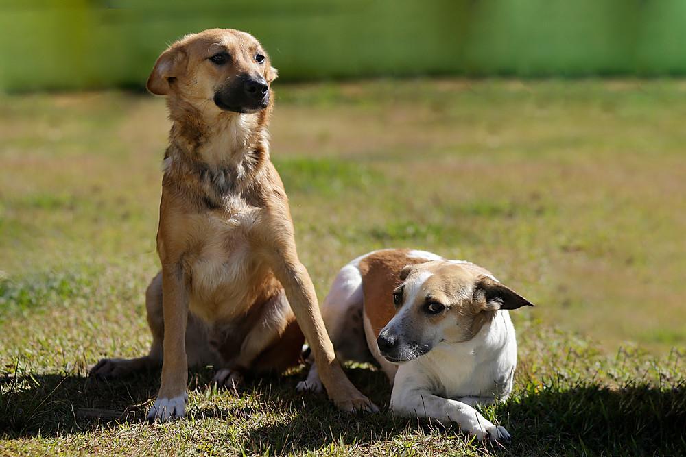 Plutto e Luz. Os dois cachorrinhos são a nossa capa: filho e mãe inseparáveis.  Amor em dobro para quem adotá-los.
