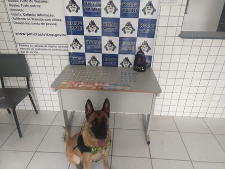 Cães da PM: nossa feroz segurança!