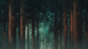 LITW banner with fog final (no text).png
