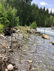 River2.jpeg