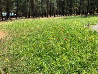 Grass1.jpeg