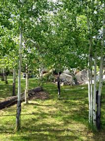 Trees5.jpeg