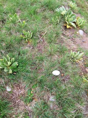 Grass2.jpeg