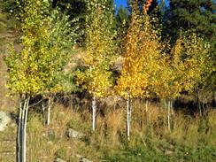 Trees6.jpeg