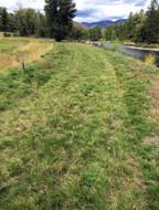 Grass3.jpeg