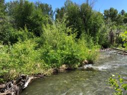 River23.jpeg