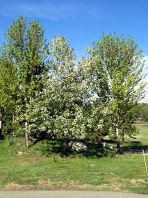 Trees4.jpeg