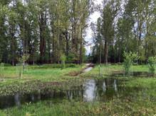 Marsh4.jpeg
