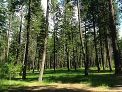 Trees11.jpeg