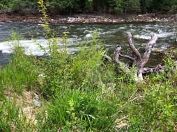 River18.jpeg