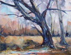 SOLD - Misty Morning Oak