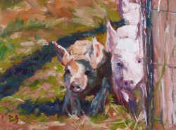 SOLD - Pig Race