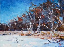 SOLD - Winter Birch