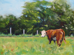 SOLD - Hello Hereford