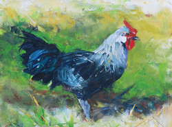SOLD - Schuster Rooster