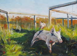 SOLD - Happy As A Pig