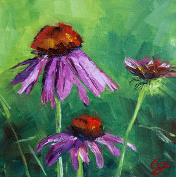 SOLD - Summer Cone Flowers