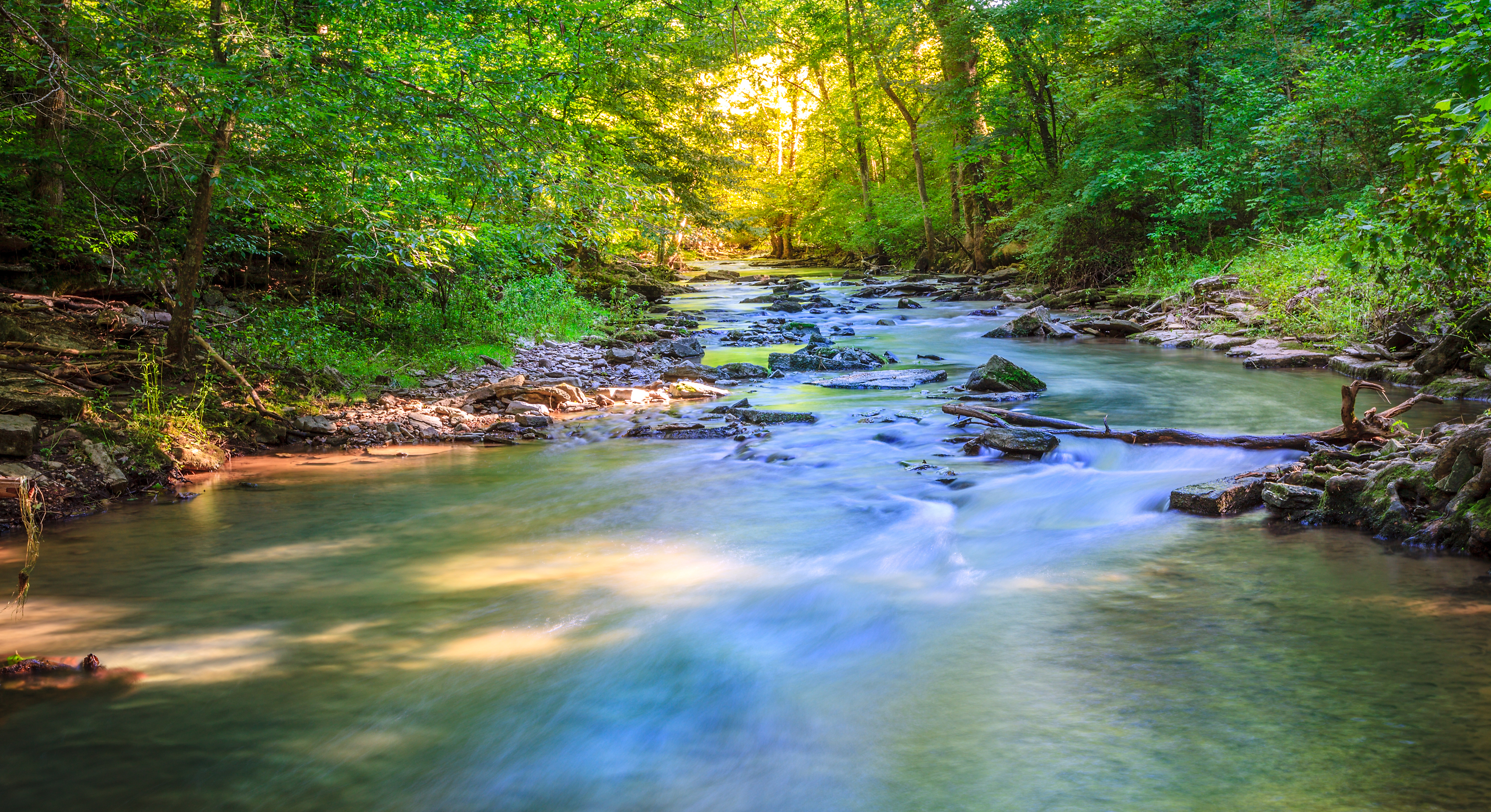 bigstock-Creek-in-the-forest-55063418
