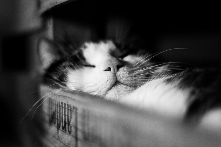 Tierfotograf_Katzen (4).jpg