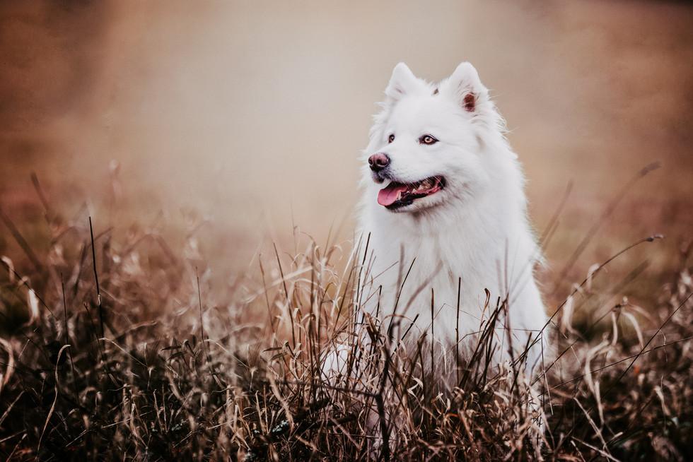 2017_Hundefotograf_Khaleesi (6).jpg