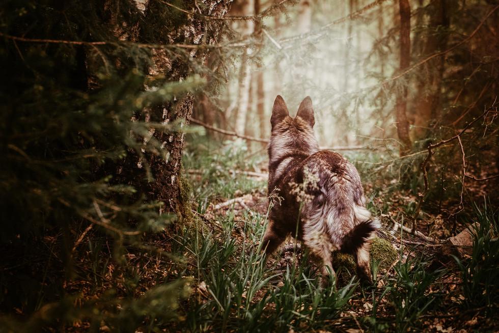 Tierfotografie_Hunde_Bad Kreuznach (9).j