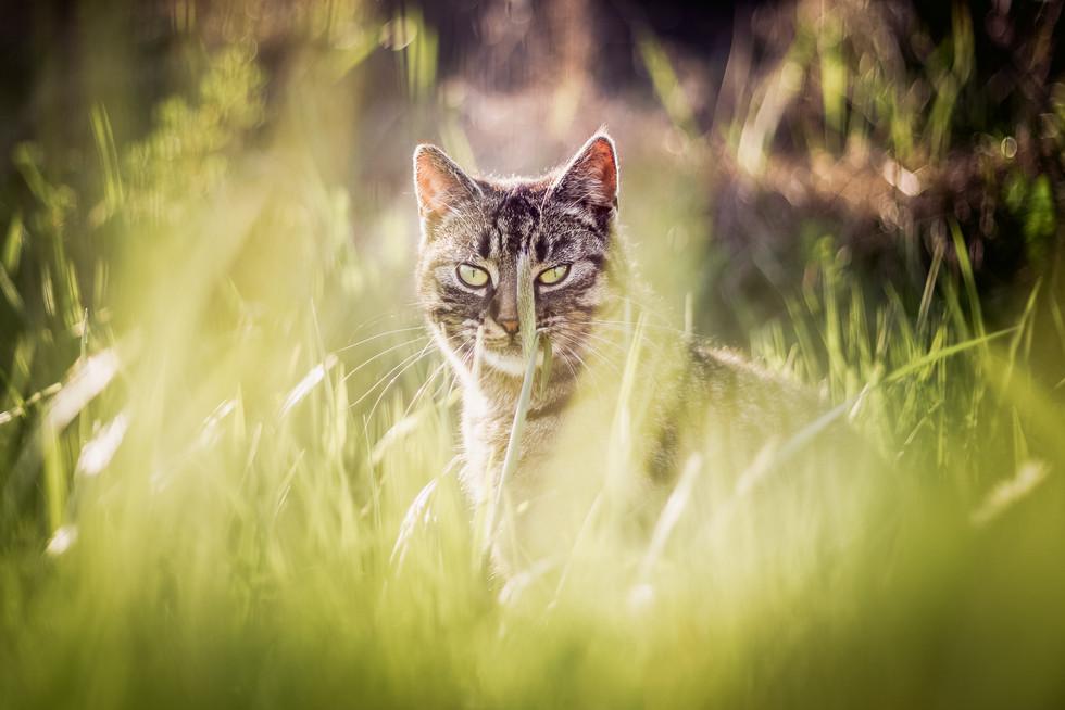 Tierfotograf_Katzen (6).jpg