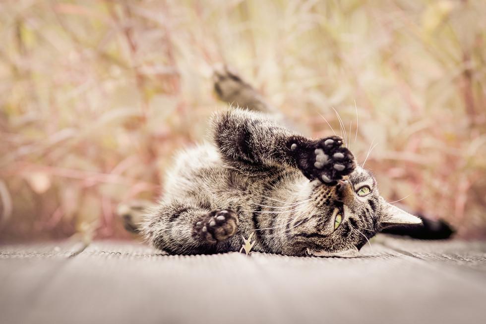 Tierfotograf_Katzen (18).jpg
