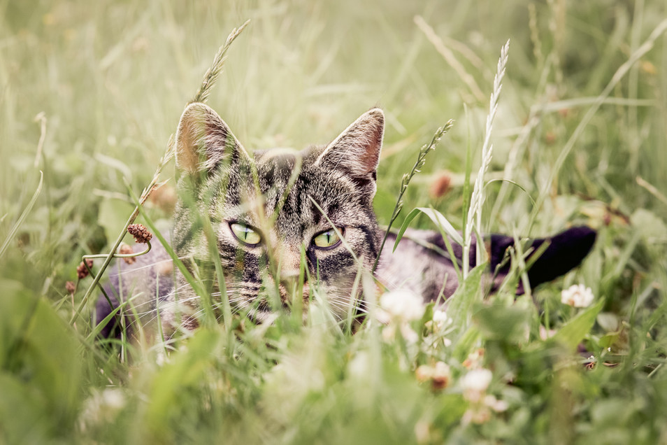 Tierfotograf_Katzen (20).jpg
