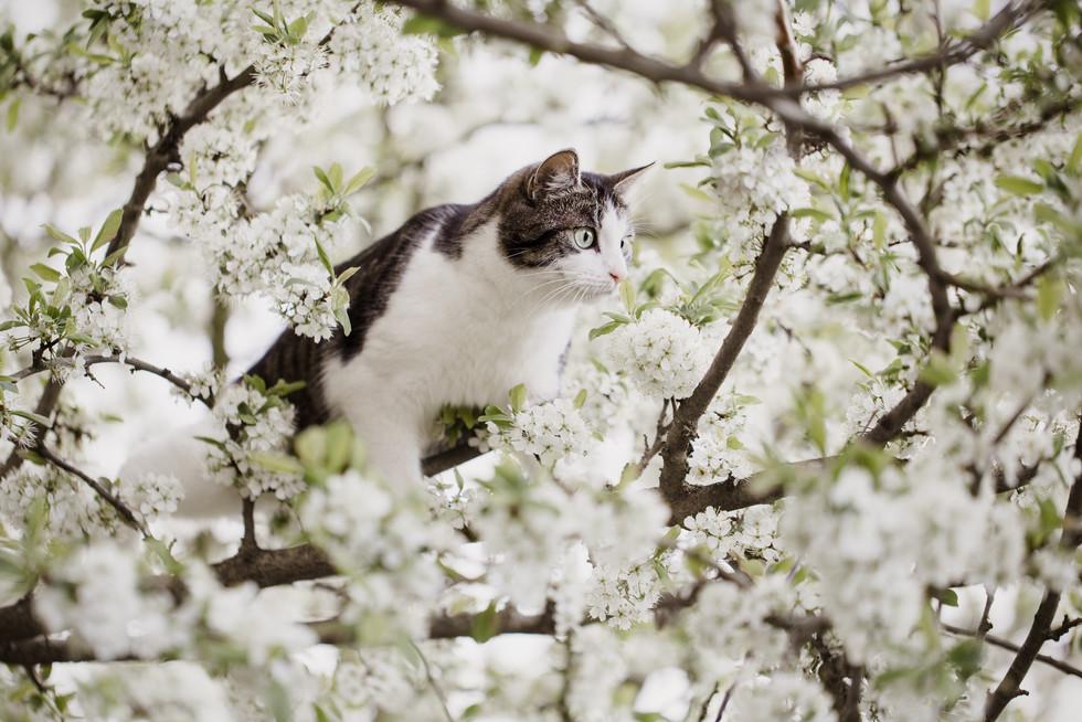 Tierfotograf_Katzen (12).jpg