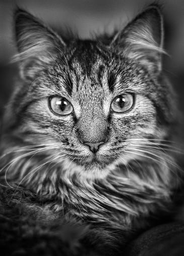 Tierfotograf_Katzen (5).jpg