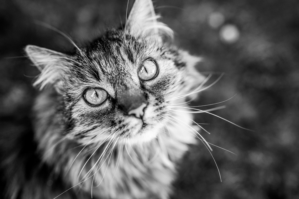Tierfotograf_Katzen (27).jpg