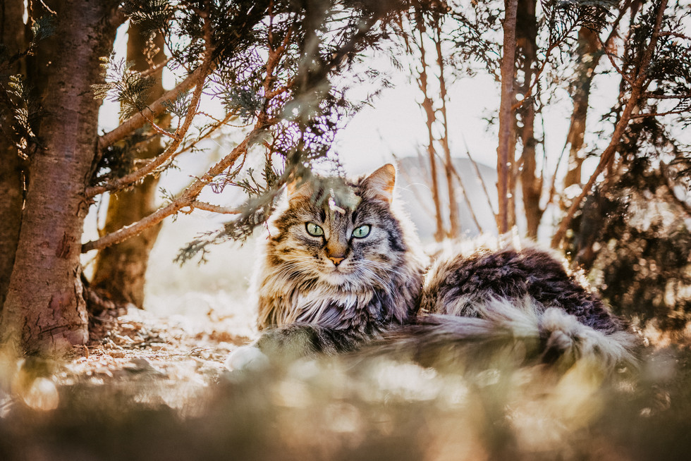 Tierfotograf_Katzen (15).jpg