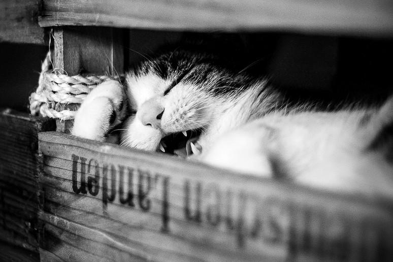 Tierfotograf_Katzen (3).jpg