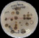 미생물-removebg-preview.png