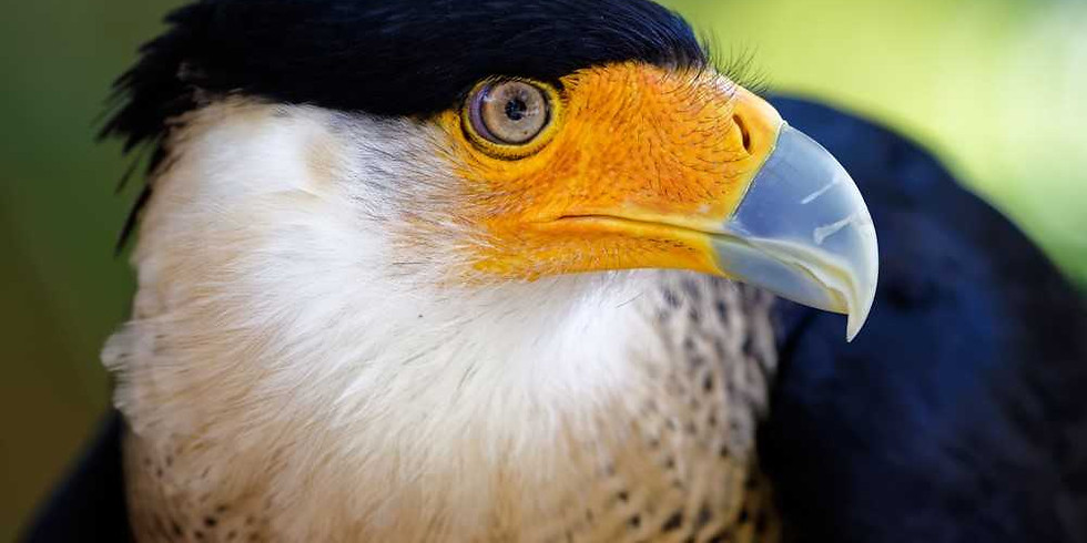 Hawks, Falcons & Eagles Lecture