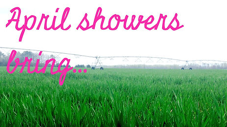 april-showers-bring_edited.jpg