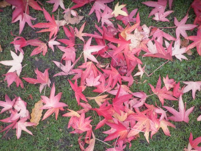 Autumn's changing colours...