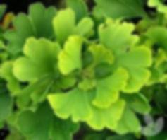 natural herbs near me