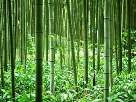 Nytt år og nytt bambus produkt i produksjon ;-)