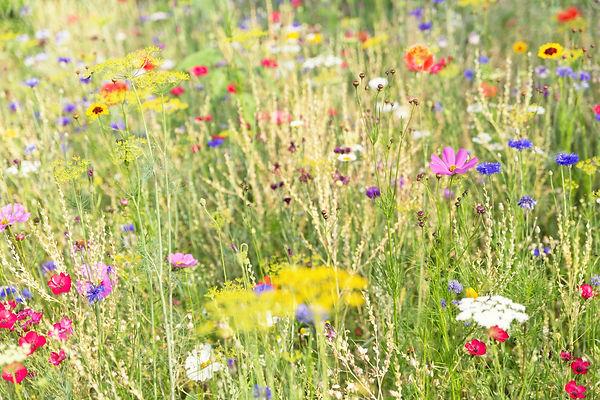 Blumenwiese_main.jpg
