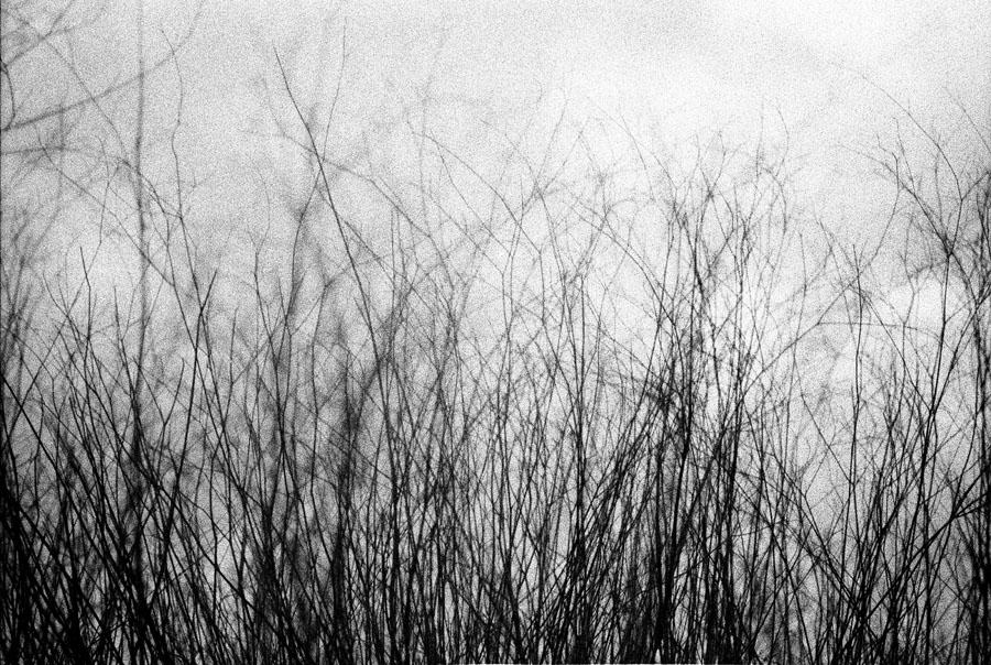 Weeds/Minefield